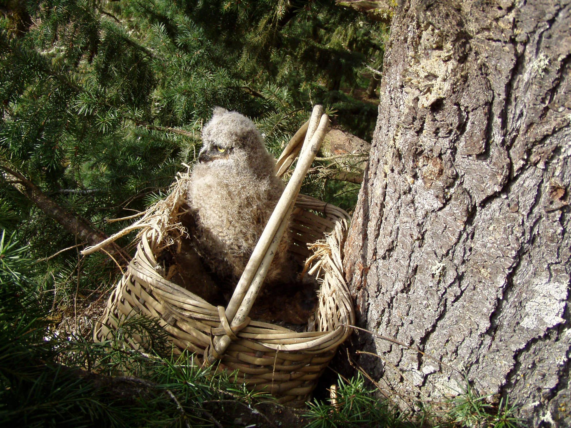GHOW nestling basket