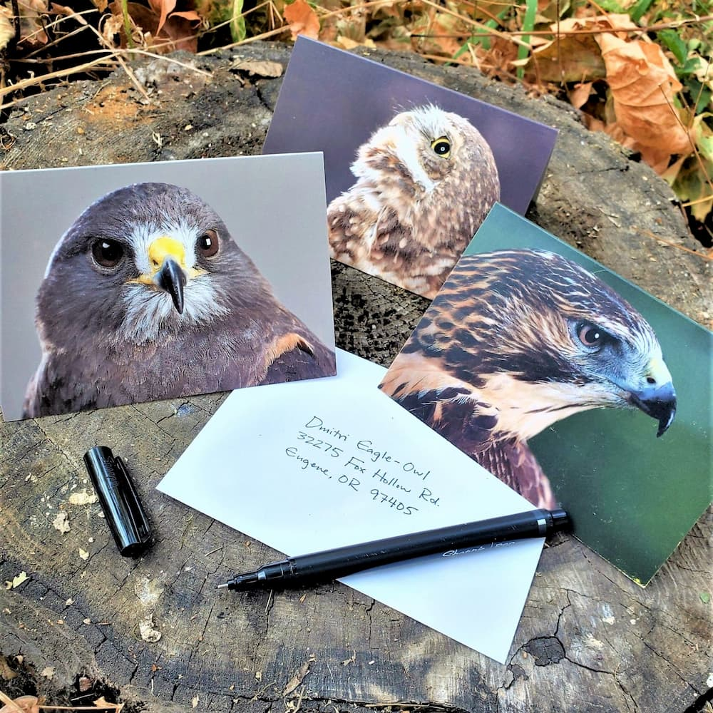 Resident Raptor Greeting Cards